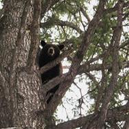 bear-pics-june-2009-007