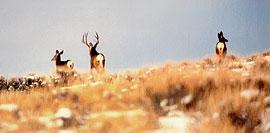 h_deer_field