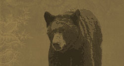 middlefork lodge outfitters bear hunt graphic